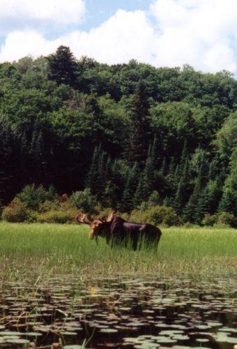 algonquin park canoe routes pdf